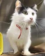 Name Mr Hollywood Animal Id 33618928 Update Rescued Animals Dog Cat Pet Care