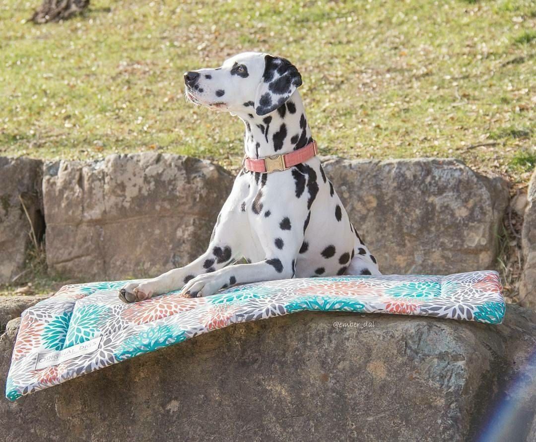 cat mat or pet bed dog crate mat small dog bed to xl dog bed