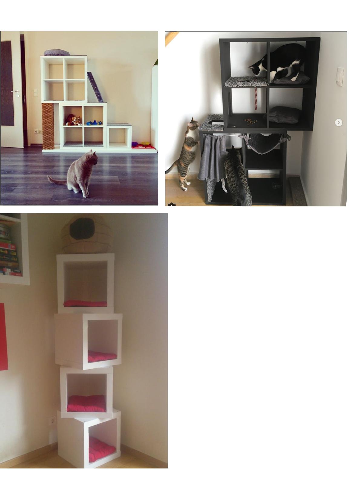 Ikea Kallax Cat Hack Idea Rental House Ikea Cat Cat Hacks Kallax