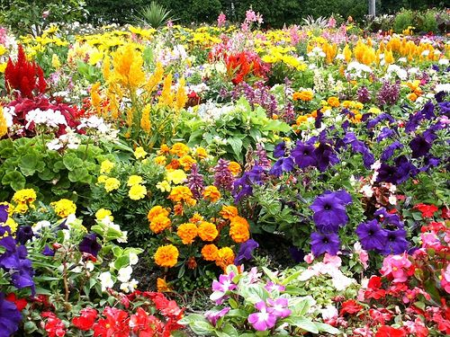 The Ultimate Flower Garden Gardening Beautiful Flowers Garden