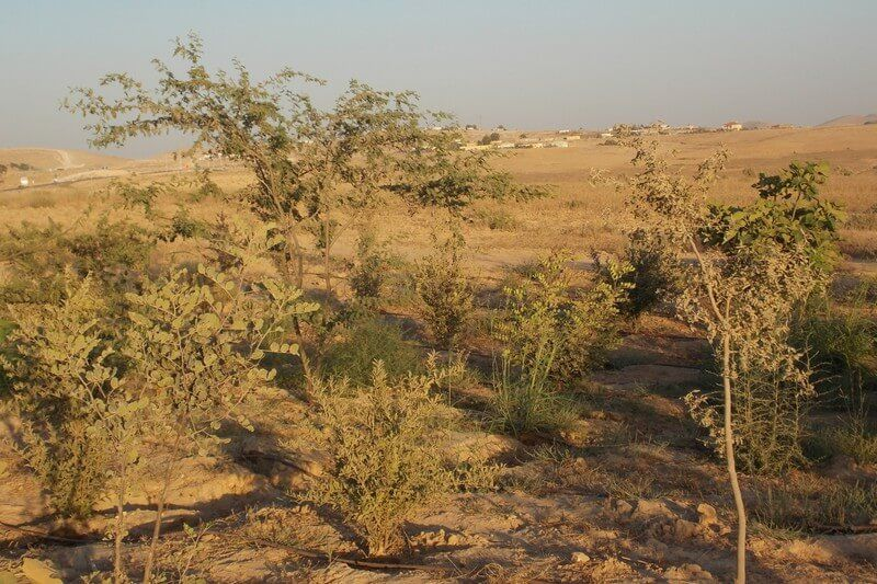 مذكرة تخرج تآكل التنوع النباتي في منطقة قسنطينة Agriculture Country Roads Farmland
