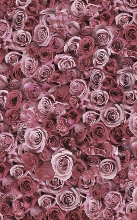 dusty rose pink roses � things i love in 2018�