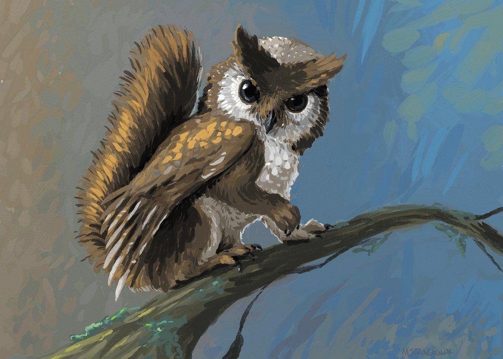 Squirrel Owl Griffin Concept Owl Cartoon Drawings Squirrel