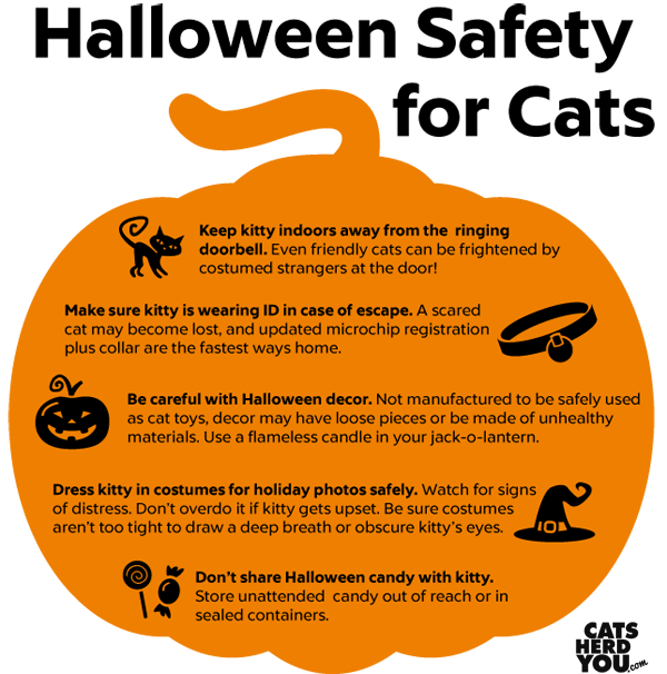 Cat Safety Tips | Halloween Safety Tips for Cats