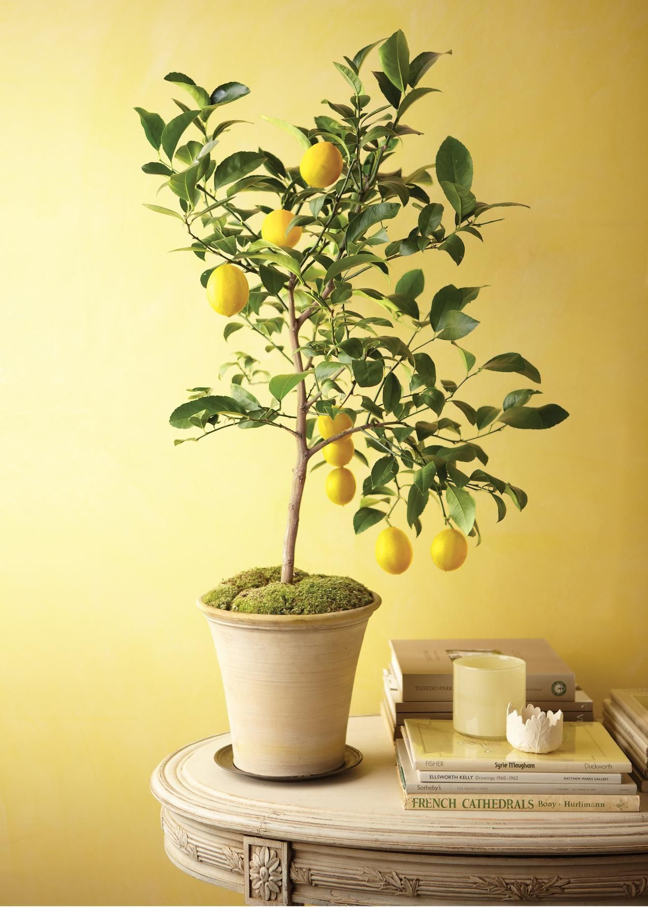 The Next Statement House Plant R I P Fiddle Leaf Fig Tree Citrus Tree Indoor Fruit Trees In Containers Indoor Fruit Trees