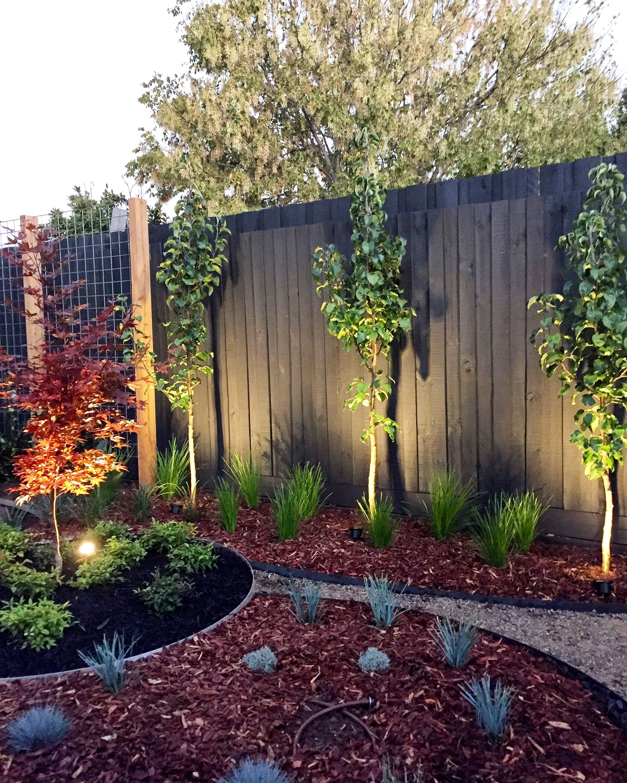 Contemporary Garden Design Installation In Mckinnon Melbourne Japanese Maple Contemporary Garden Design Installation In Mckinnon In 2020 Contemporary Garden