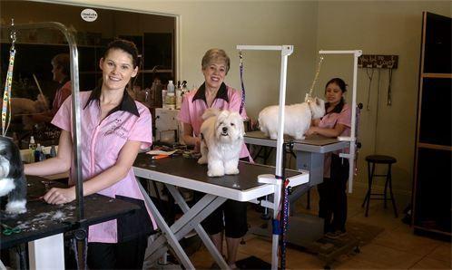 Uptown Dog Grooming Palm Desert Dog Grooming Pet Groomers Grooming