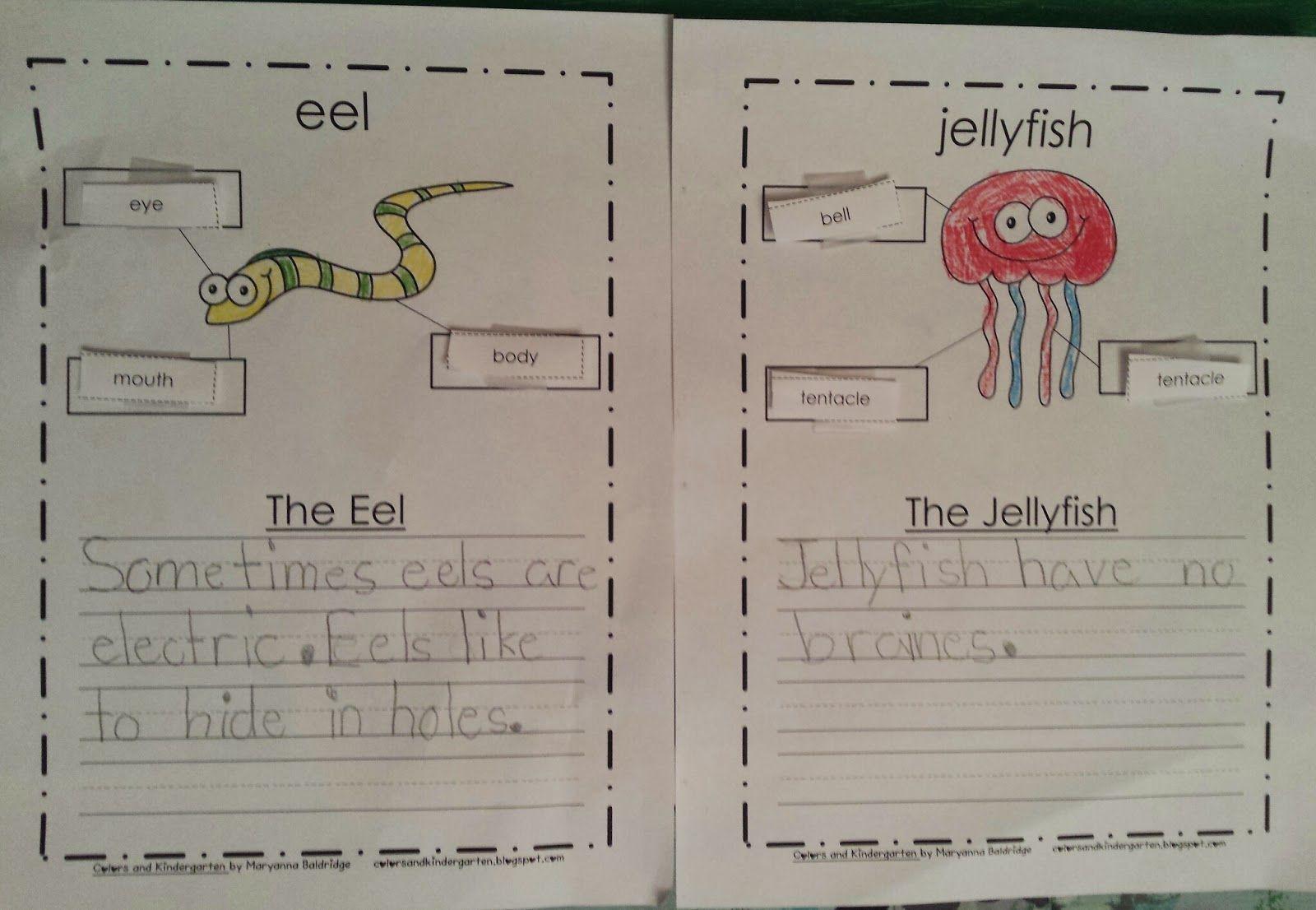 My Science Journal Ocean Pre K Kindergarten 1st Grade