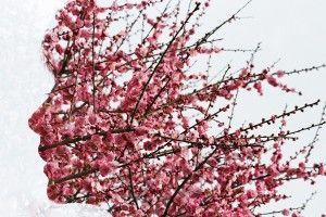Awesome Wallpapers Wallhaven Cc Cherry Blossom Tree Blossom Trees Sakura Tree