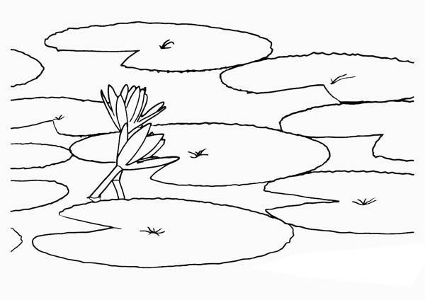 How To Draw Lily Pad Coloring Page Color Luna In 2020 Flower Coloring Pages Lilies Drawing Flower Drawing