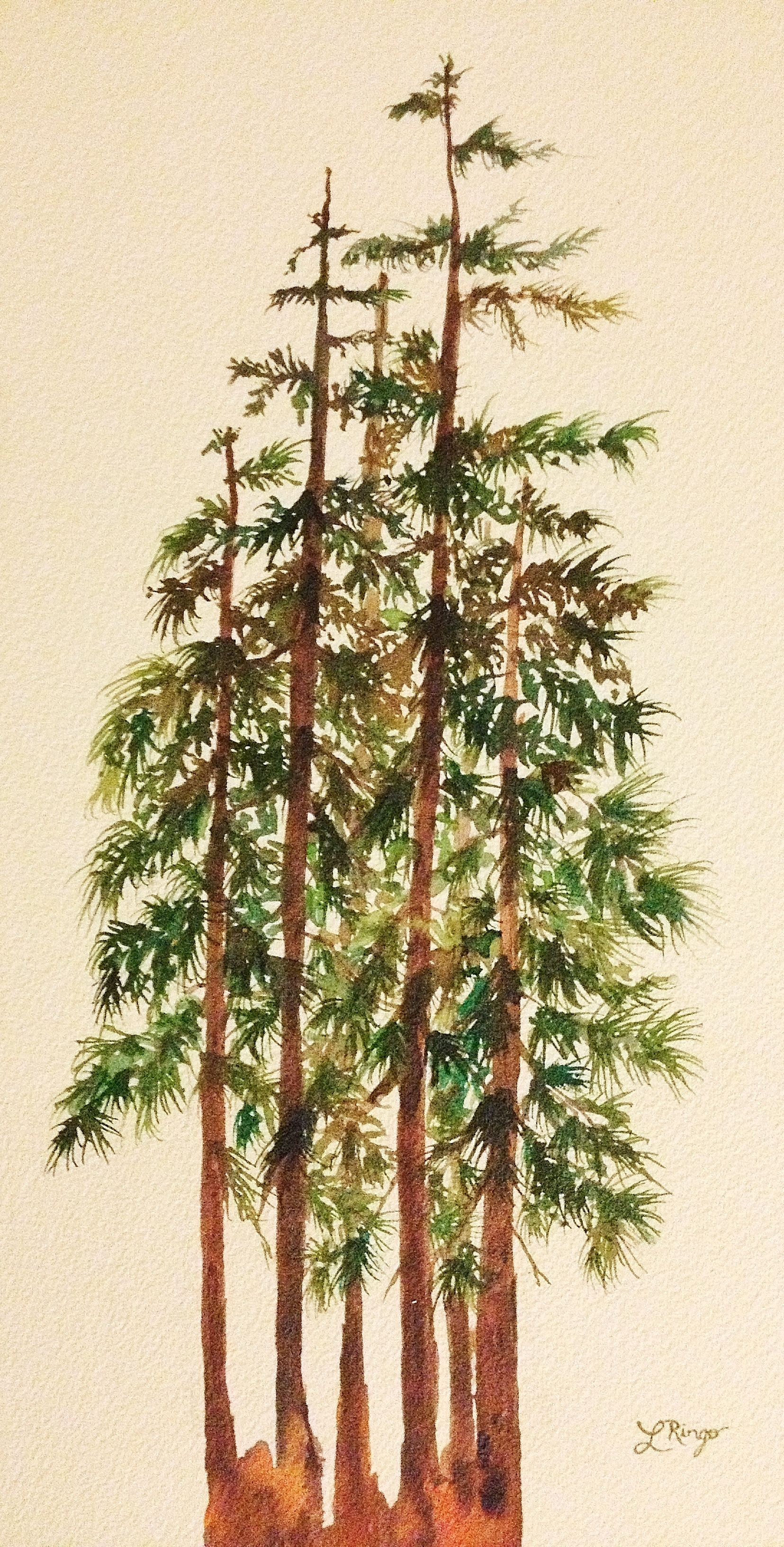 Pine Trees A Watercolor Painting By Me Pine Tree Painting