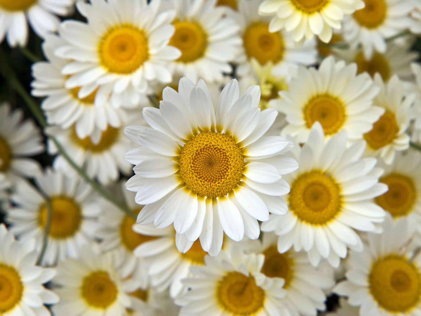 tumblr Flower Background tumblr wallpaper, wallpaper