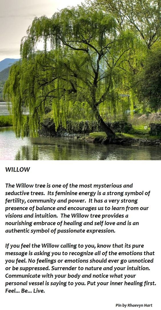 Trees Associated With Hecate The Willow Tree Tattoo Pinterest