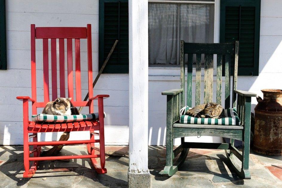 Barn Cats In The Sun