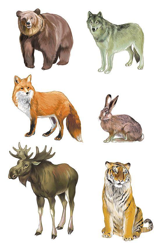 набор картинок дикие животные россии