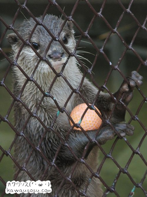 Otter and his toy