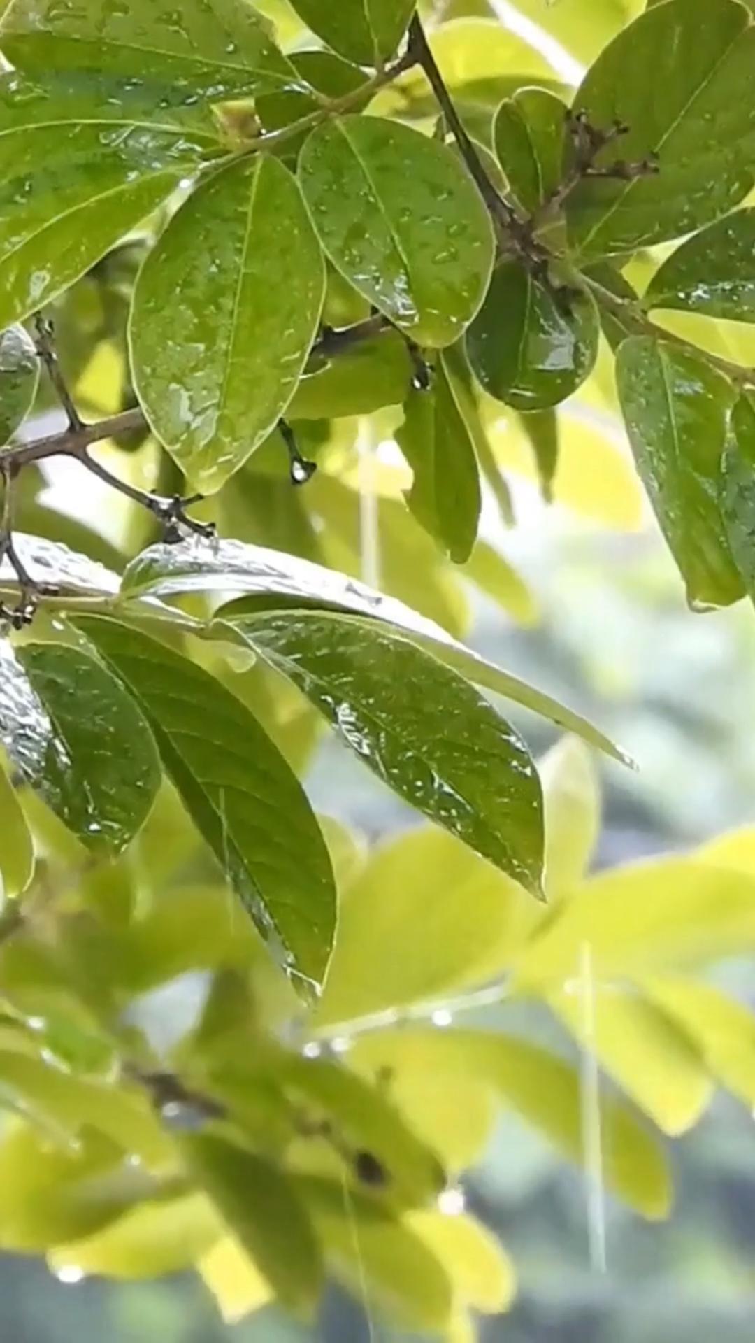 Rain Sounds and Music for Sleeping 3 Hours - Beautiful Relaxing Rain Sceneries