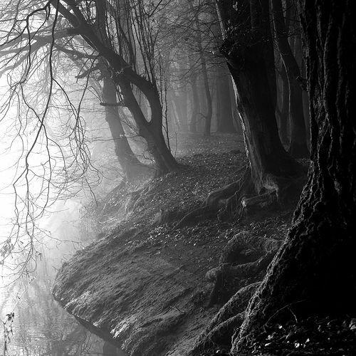 Black forest lesbian