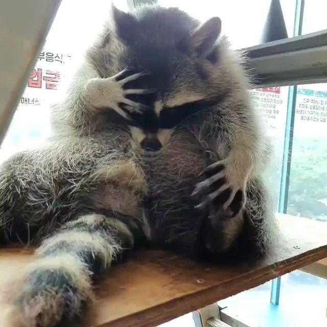 #cutestbabyanimal  #cutebabieanimals  #coolanimals Video IG  @raccoonpage #baby #animals Cutest baby animals videos compilation which includes super cute little babies clips that will force you to say AWW!