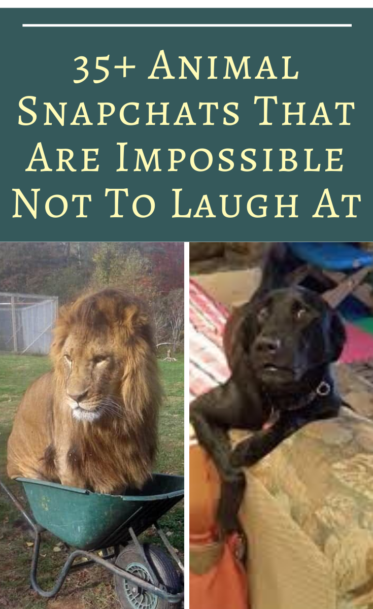35+ Hilarious Animal Snapchats That Are Impossible Not To