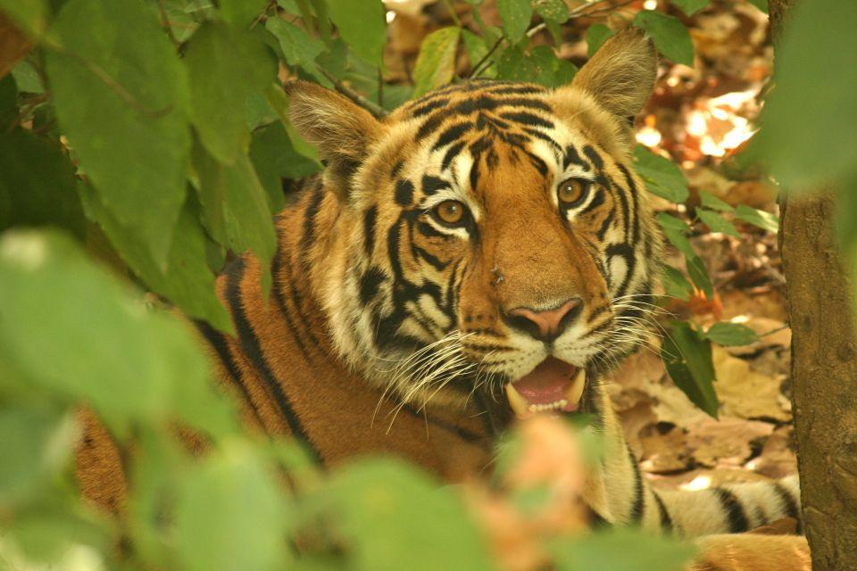 Kanha National Park, Madhya Pradesh #India #travel