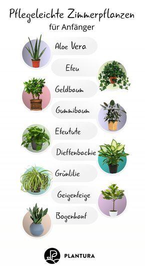 Die 10 besten Pflanzen für drinnen
