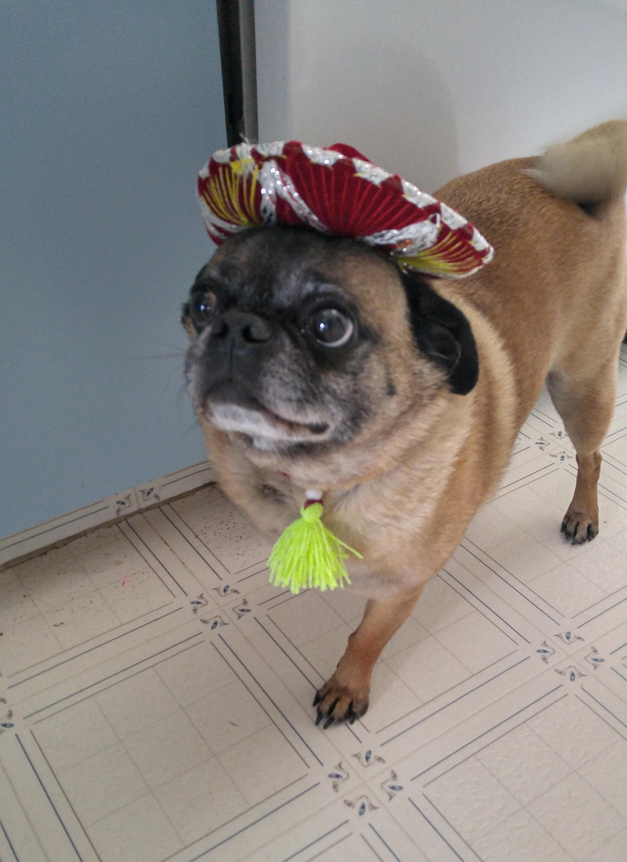 Psbattle Three Legged Pup With A Mini Sombrero Photoshop