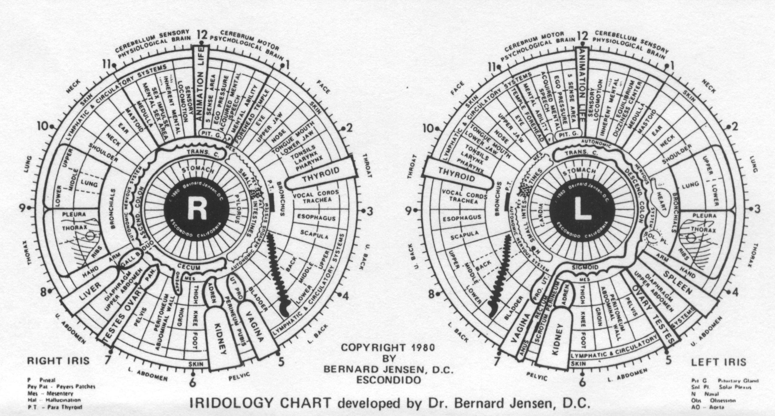 Iridology chart by dr bernard jensen amazing tool used in helping people figure out what their body needs to heal itself also rh pinterest