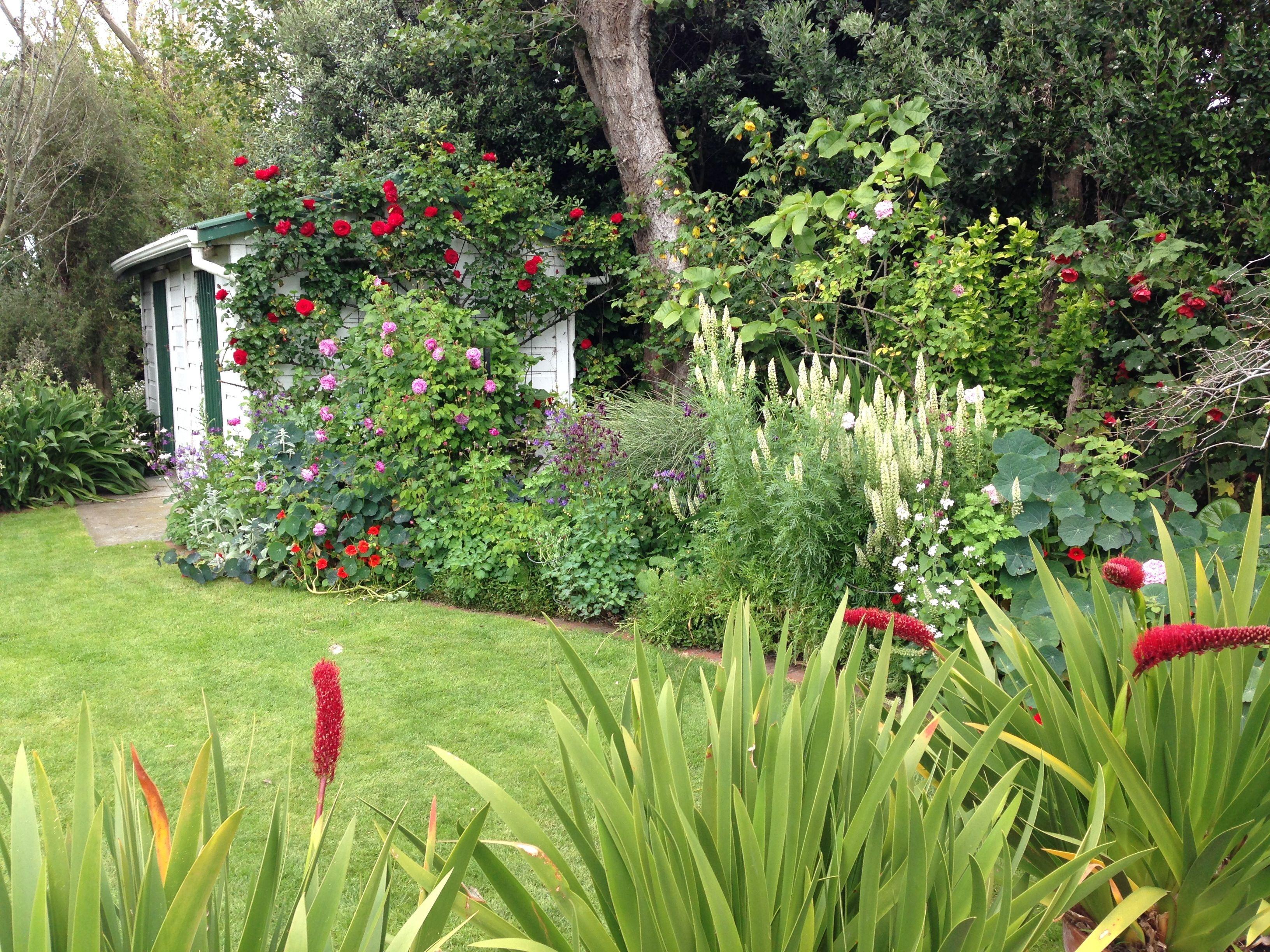 Natives: 3 Tips for a High Impact Australian Garden ...