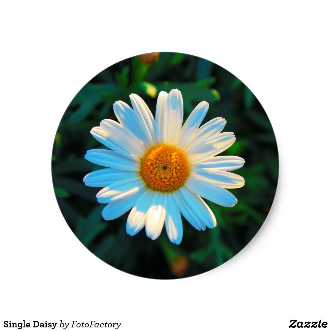 Single Daisy Classic Round Sticker