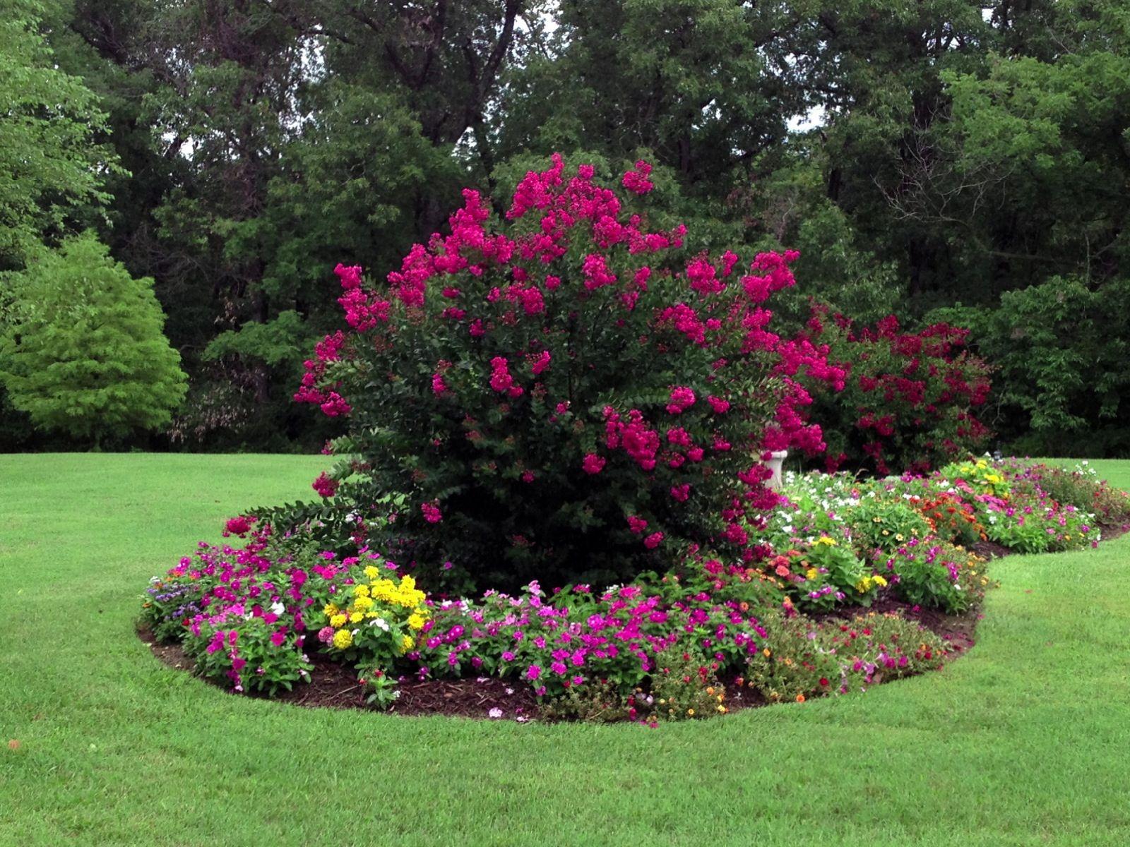 Mostly Volunteer Flowers Coming Back From Last Year Backyard Garden Patio Garden Garden