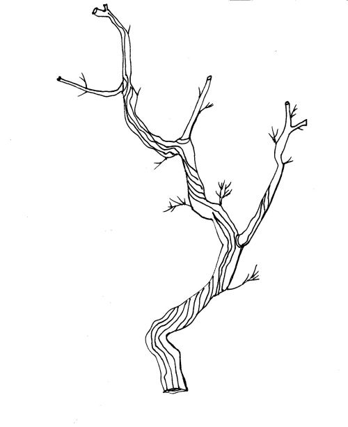 twig clipart hand drawn dividers to decorate your blog or books