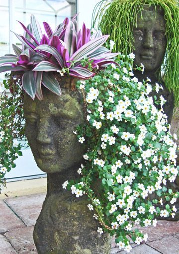 Terra-cotta woman's head planter from Stoneface Creations. (This one is planted with white bacopa and oyster plant) $108