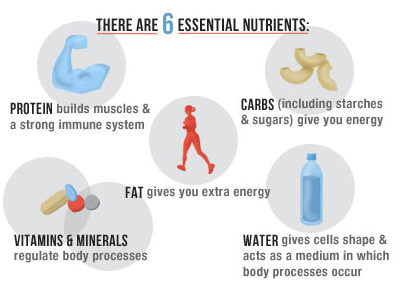Six Essential Nutrients Micro Nutrients Vitamins And Minerals