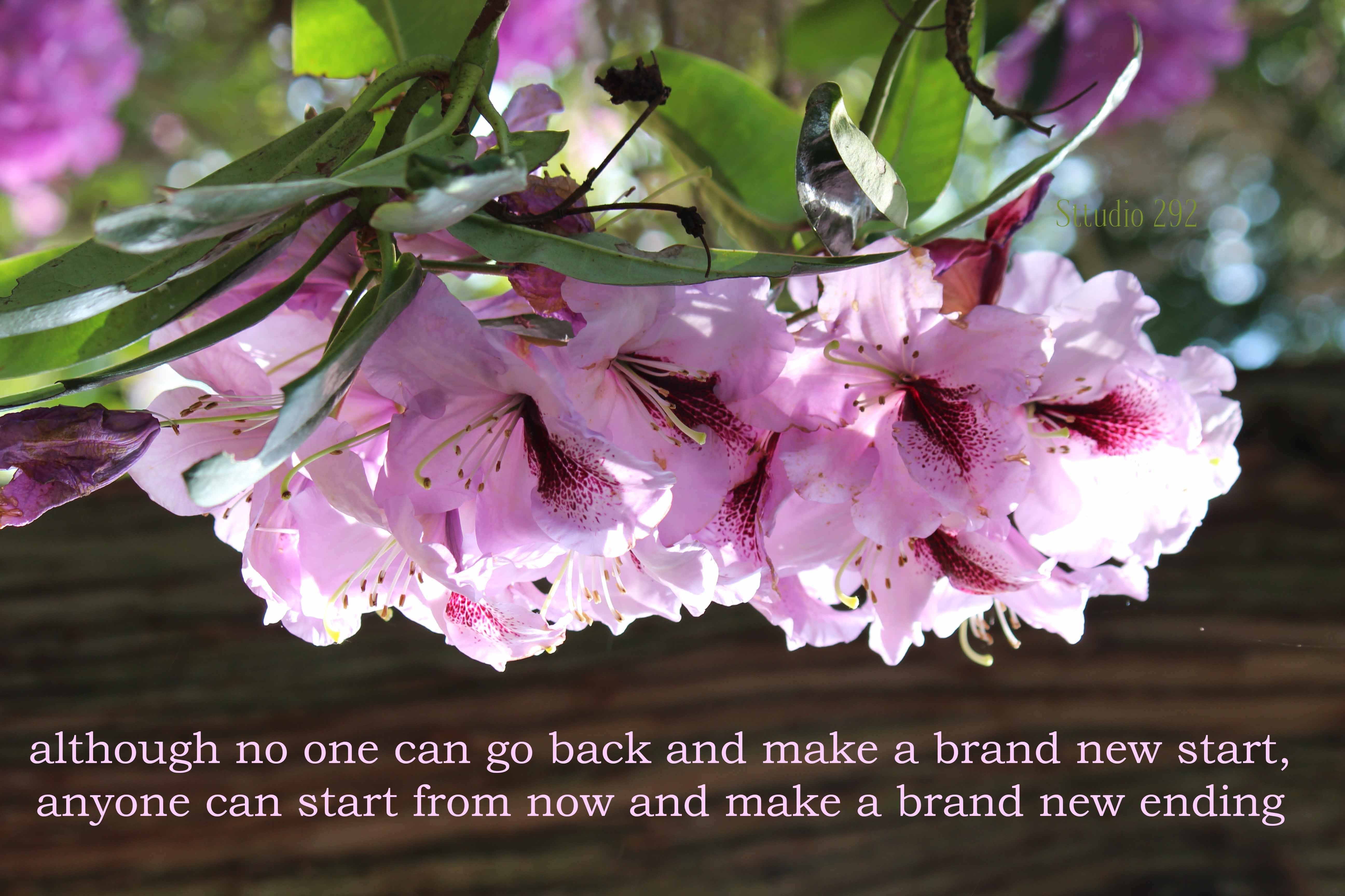 Azalea Flowers Inspirational Quotes For 2018 Beautiful Flowers