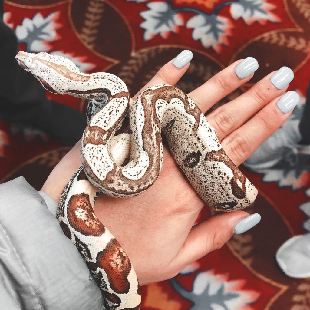 Best Beginner Pet Snakes Choosing The Right One Pet Snake