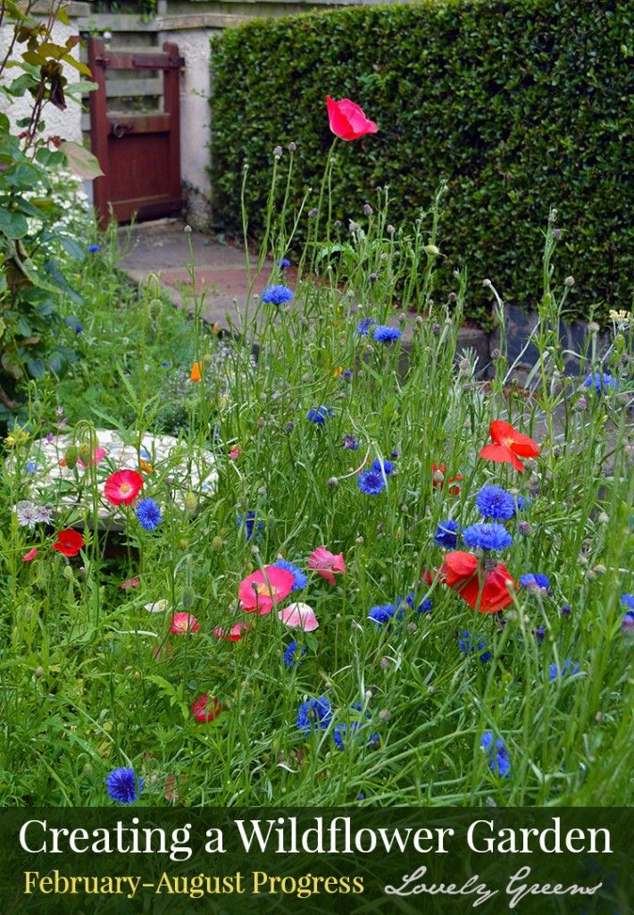 How To Create A Wildflower Garden Vibrant With Color And