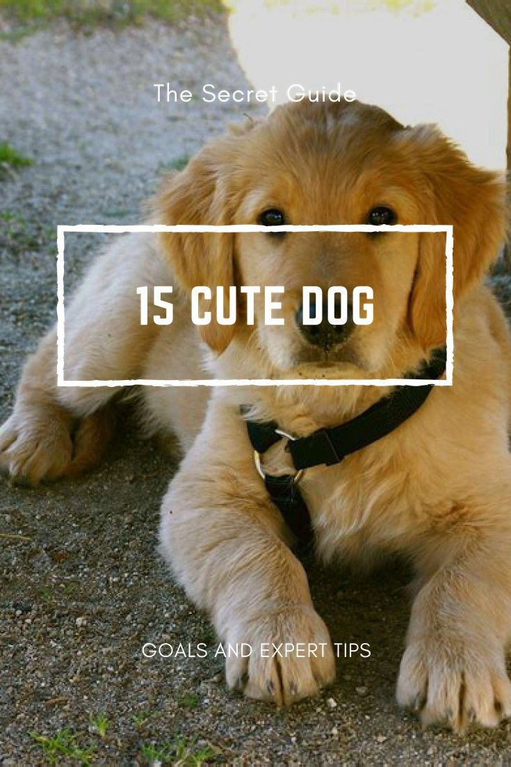 Dogs some advice for dog owners and buyers dogs cute dogs