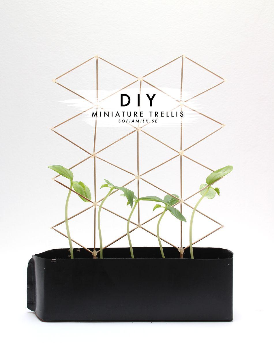 Diy Miniature Trellis 2 Sofiamilk Diy Trellis 400 x 300