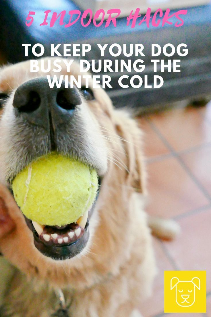 5 Indoor Activities To Keep Your Dog Moving In The Winter Cold