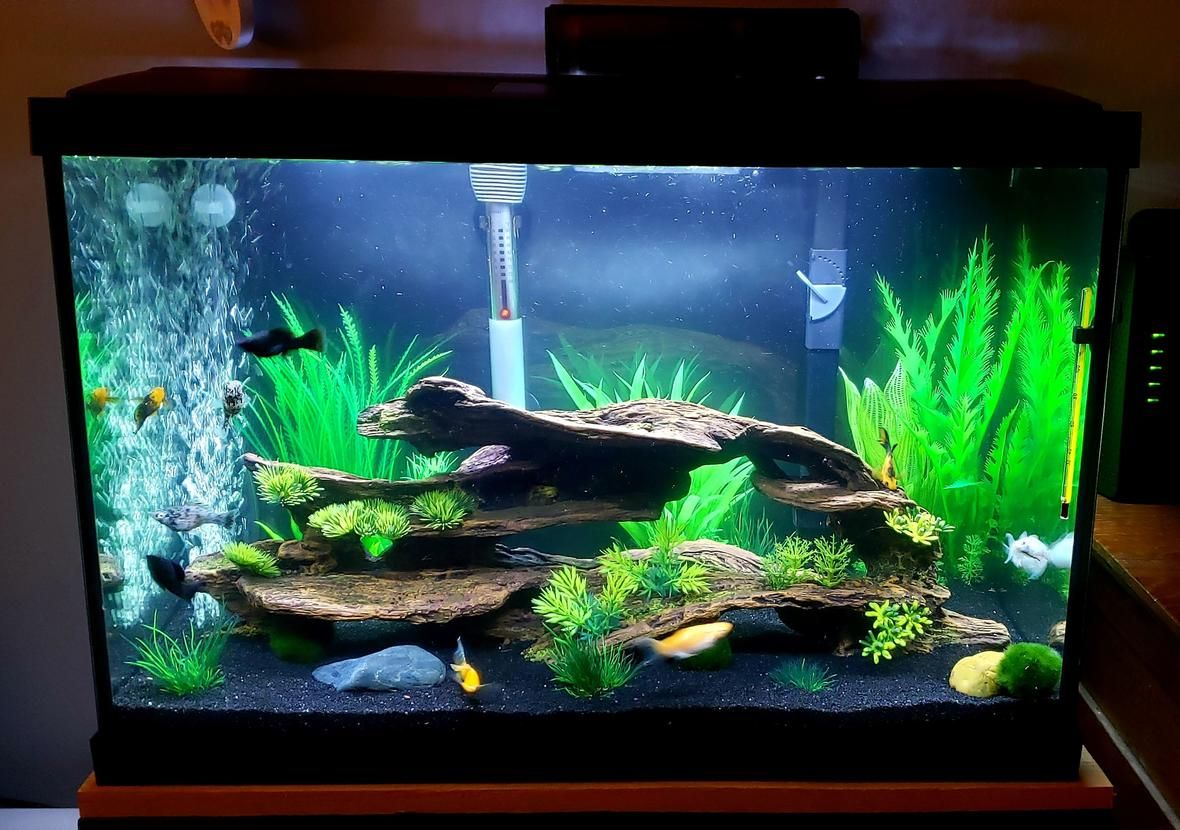 20 Gallons Freshwater Fish Tank Mostly Fish And Non Living Decorations Mollie 20g Tank Fresh Water Fish Tank Fish Tank Themes Cool Fish Tanks