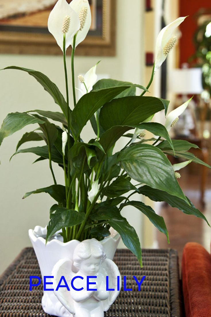 Best plants to keep in your bedroom to help you sleep plants and best plants to keep in your bedroom to help you sleep izmirmasajfo Gallery