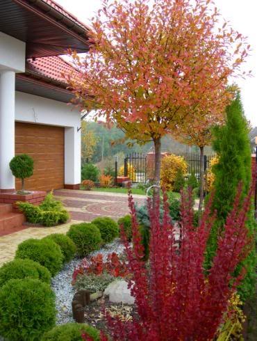Karlowe Iglaki Jesien W Ogrodzie Plants Garden Sidewalk