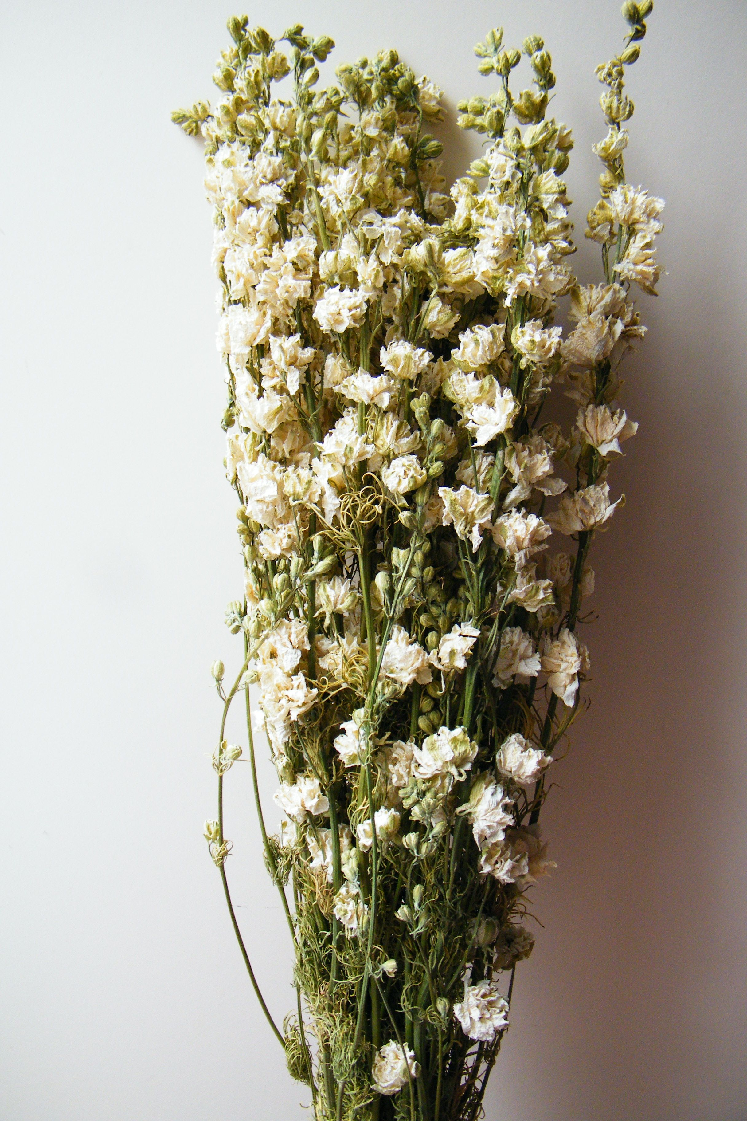 British Dried Flowers From Daisy Gifts Ltd A Bunch Of White