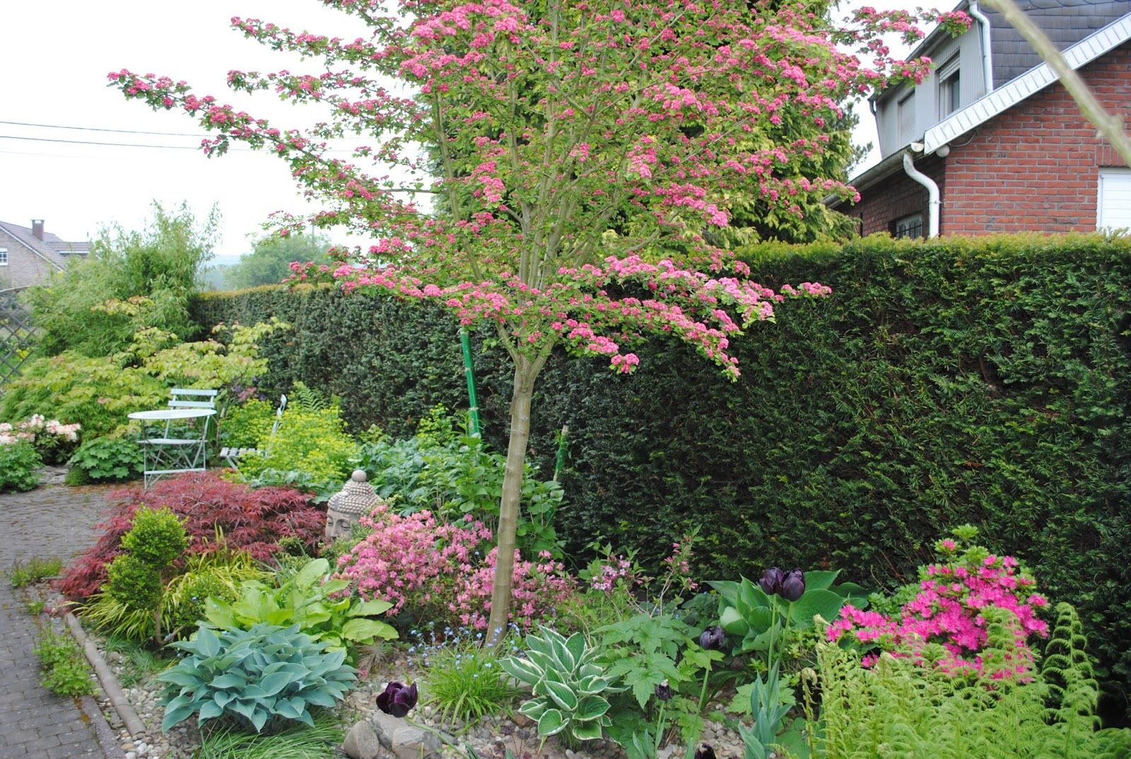 La Passion D Anne Marie Mes Arbres Pour Mon Petit Jardin Garden
