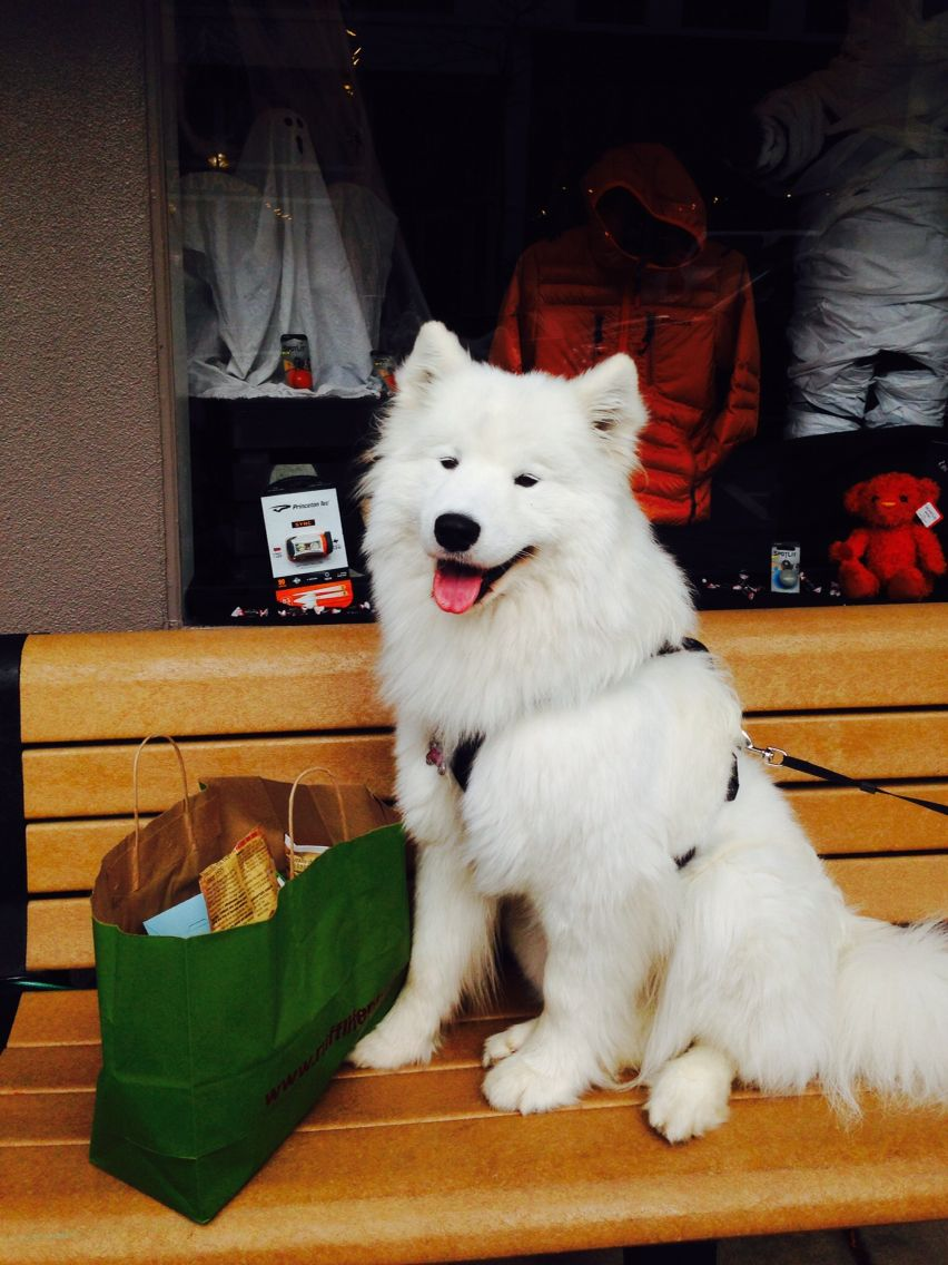 New Toys Samoyed Dogs Polar Bear Dogs Cute Dogs And Puppies