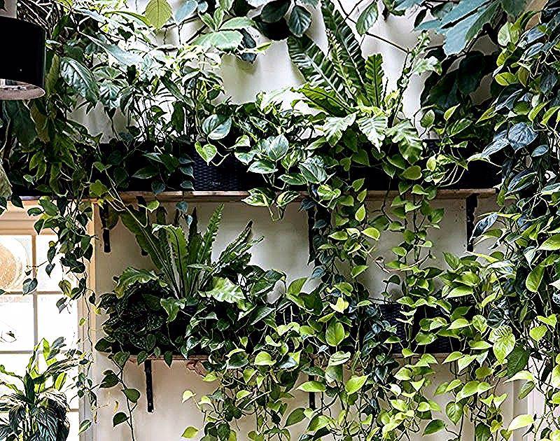 Menyegarkan 9 Item Dekorasi Ini Bikin Teras Minimalis Hijau Berencana Membuat Teras Rumah Perhatikan 5 Tips M In 2020 High Quality Wallpapers Plants Desktop Pictures