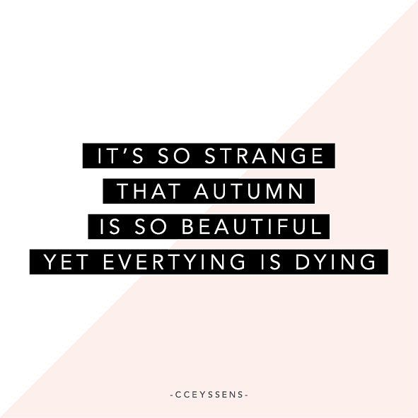 Sso Quote Qotd #autumn #cosy #sad #nature #beautiful #love #qotd #quote