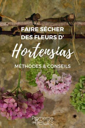 Comment faire sécher les fleurs d'hortensia - Tutoriel (avec images) | Faire sécher des fleurs ...