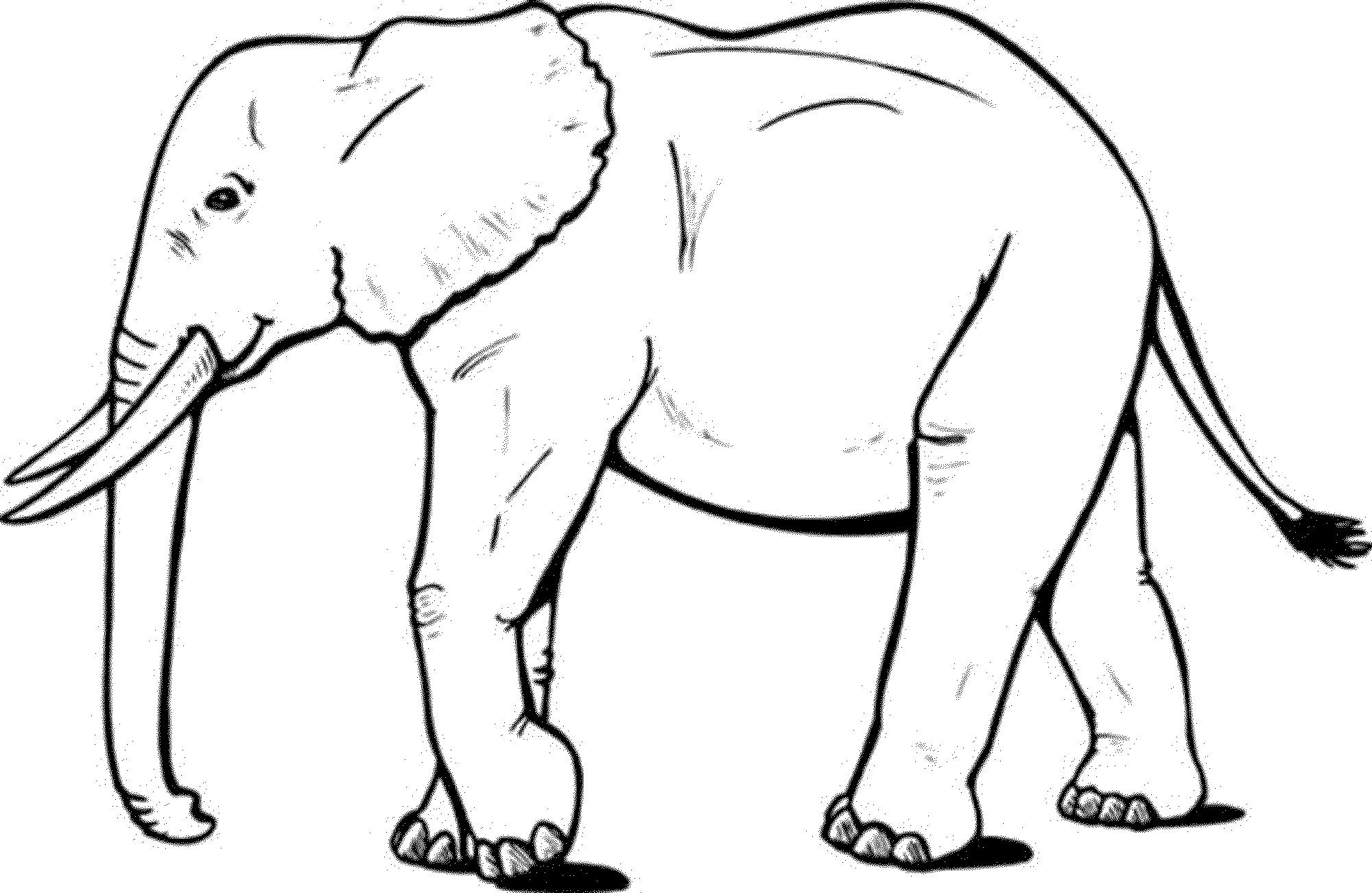 Coloring Outline Elephant